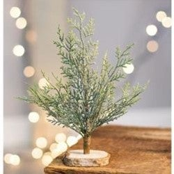 """Frosted Cypress Tree, 8"""""""