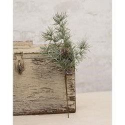 "Weeping Pine Pick, 14.5"""