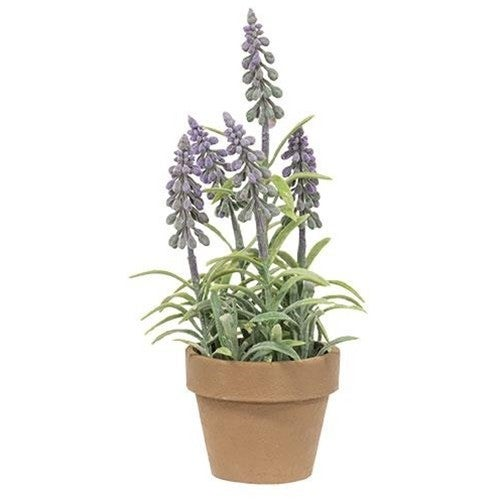 Potted Mountain Bells, Purple