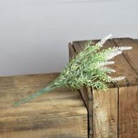 White Lavender Bush