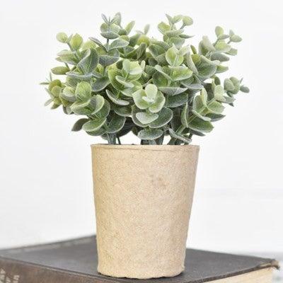 Eucalyptus In Paper Pot