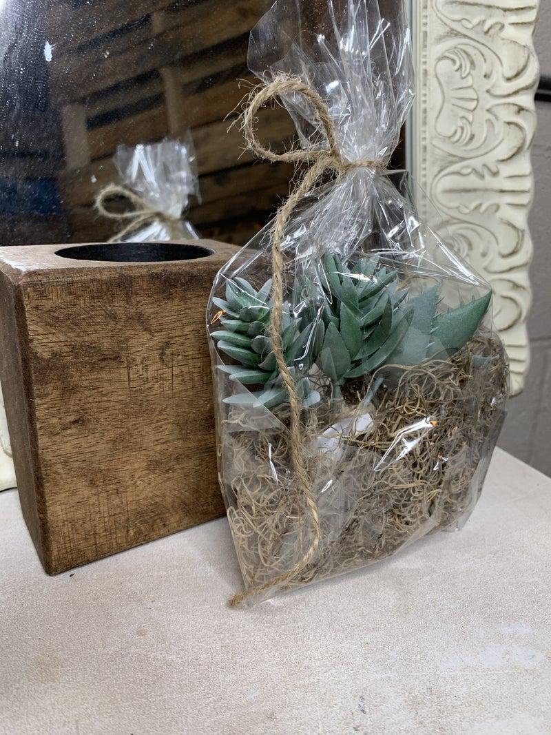Assorted Succulent Sugar Mold Kit
