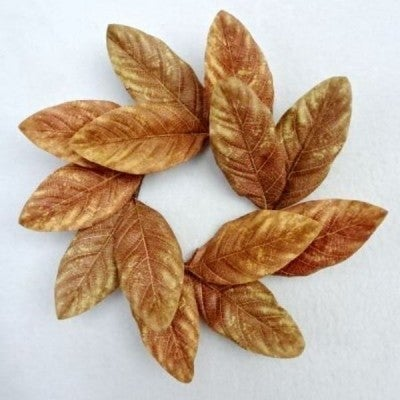 "12"" Magnolia Wreath - Brown"