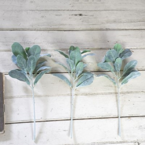 Lambs Ear Stem - set of 3