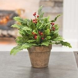 Potted Dazzling Holly