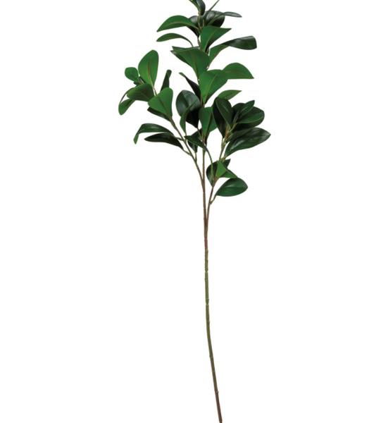 Magnolia Sm Leaves Stem