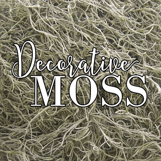 Decorative Moss