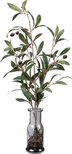 Olive Branch in Vase