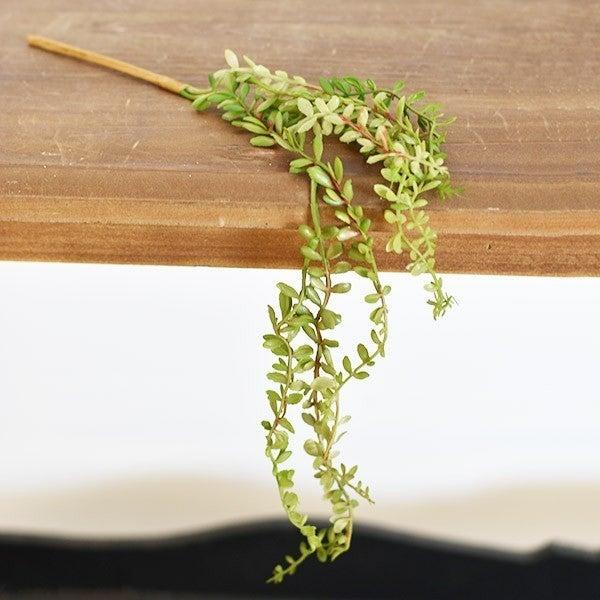 Mini Hanging Succulent