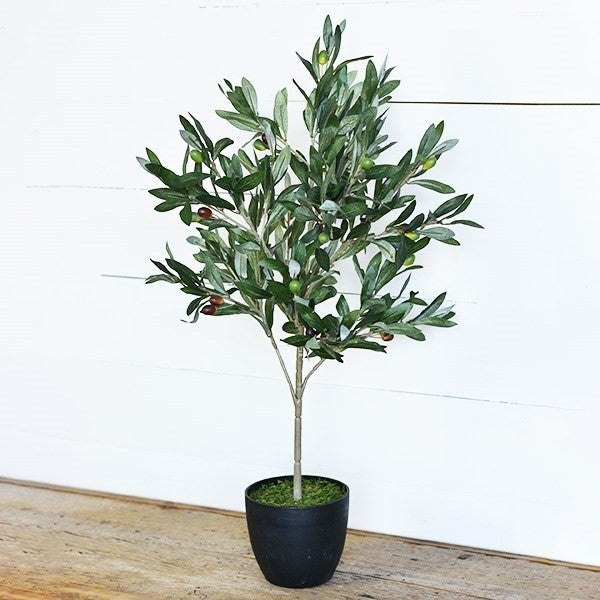 Olive Tree with Pot