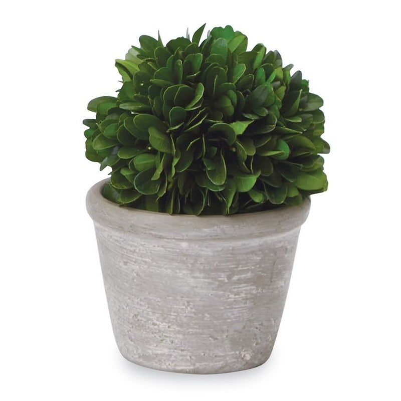 Potted Boxwoods