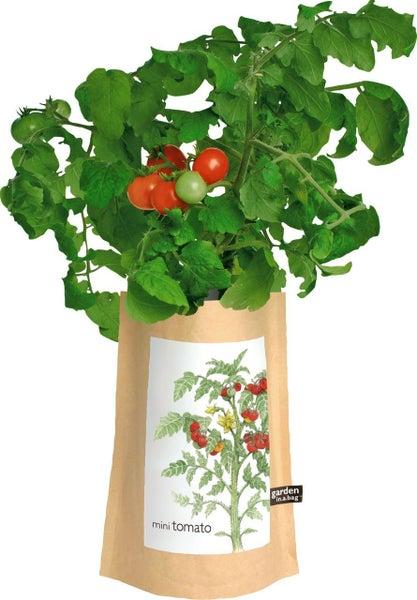 Garden in a Bag Tomato