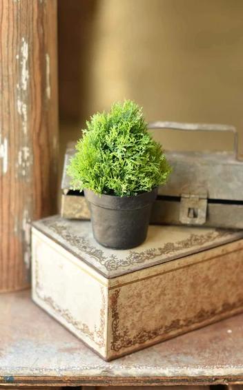 "5.5"" Greenpoint Pot No. 2"
