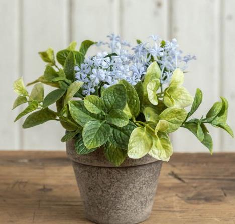 """6.5"""" Light purple potted jasmine and mint"""