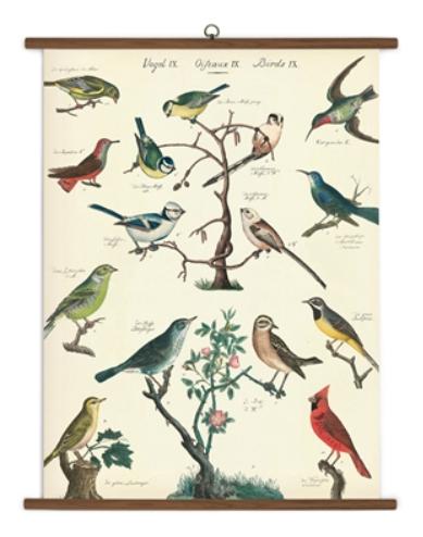 Bird School Chart