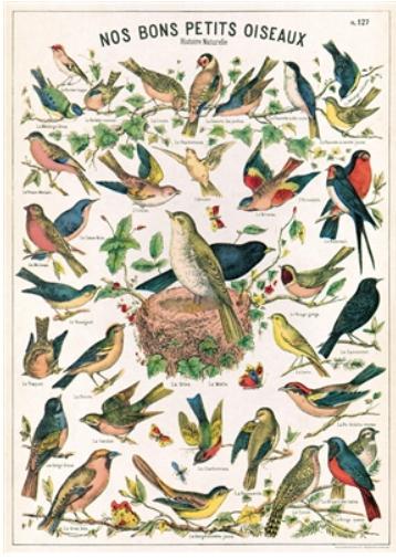 Bird Chart Wrap