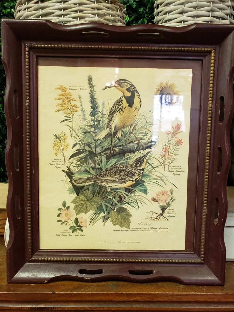 Framed bird print-NO SHIPPING