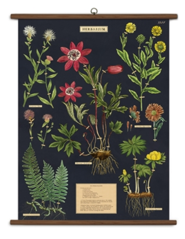 Herbarium School Chart