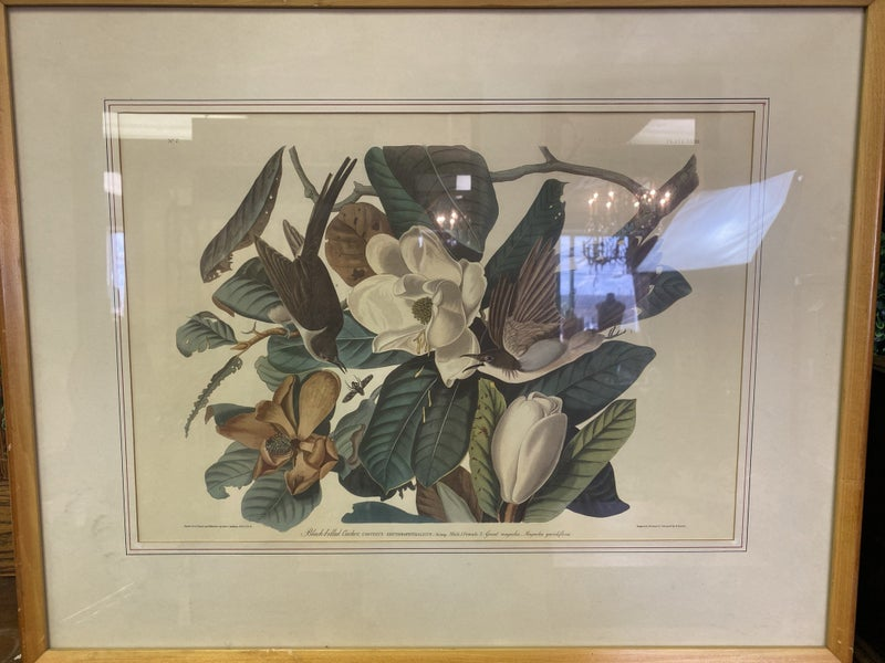 FRAMED BOTANICAL PRINT - NO SHIPPING