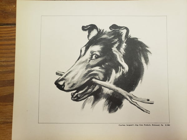 1950's SERGEANT DOG PRINT