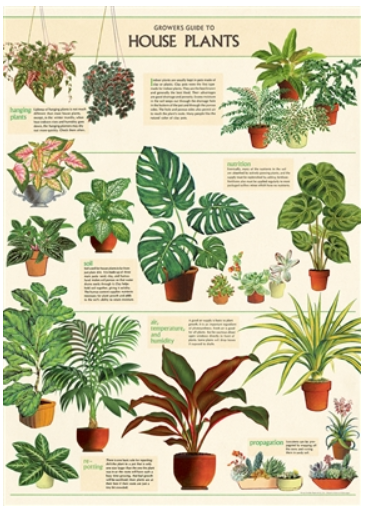 House Plants Wrap