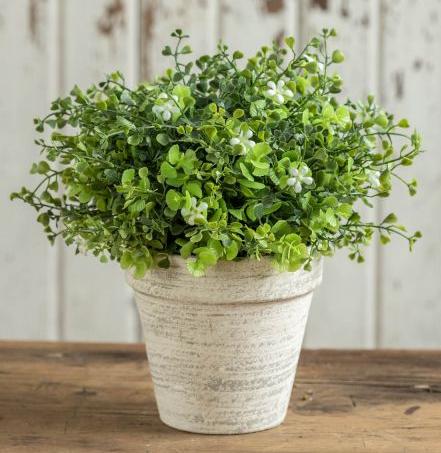 "9"" White flowering greens in ceramic pot"