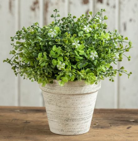 "9"" White flowering greens in ceramic pot"