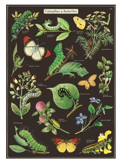 Caterpillars and Butterflies Wrap