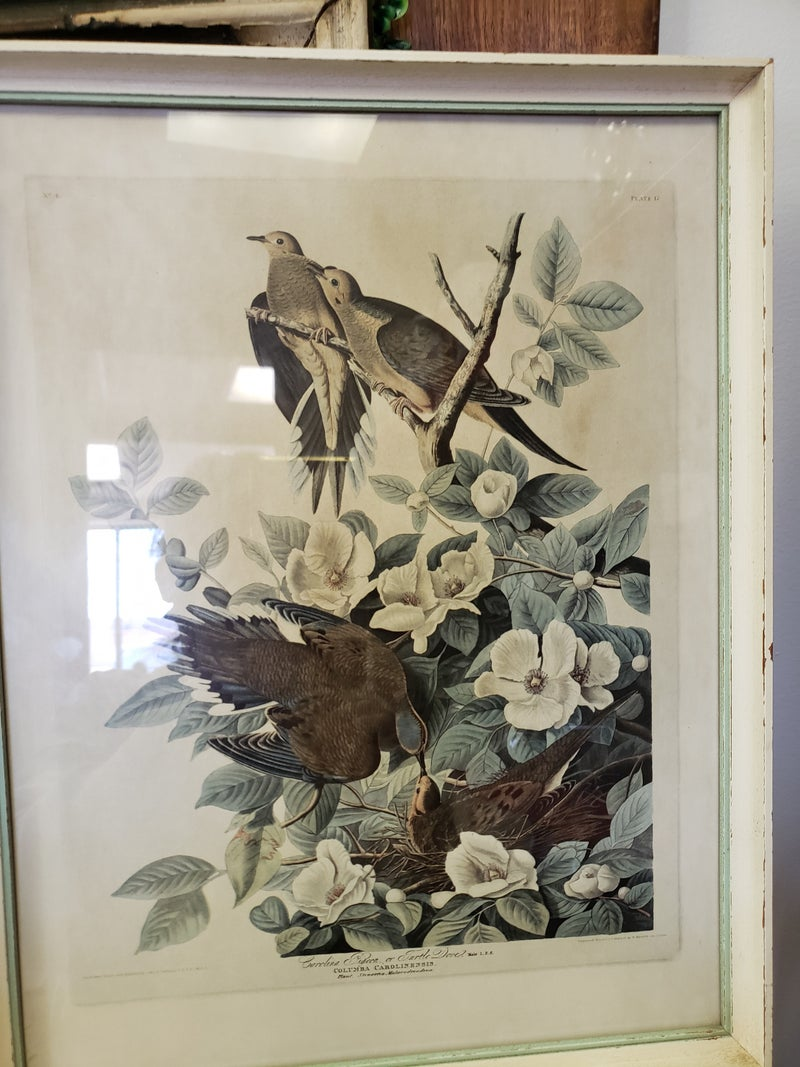 Vintage Print-Turtle Doves
