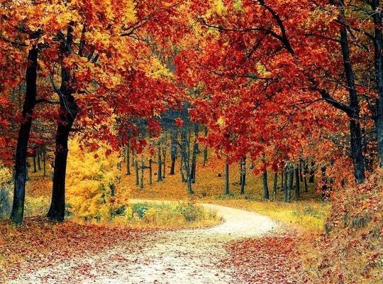 """9/7: SQUARE Autumn 8""""x10"""" (GF-082)"""