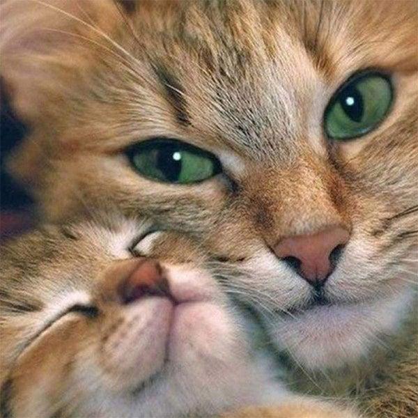 "5/28B: Snuggle Cats (Full drill - round diamonds) 9.5""x9.5"" (#575)"