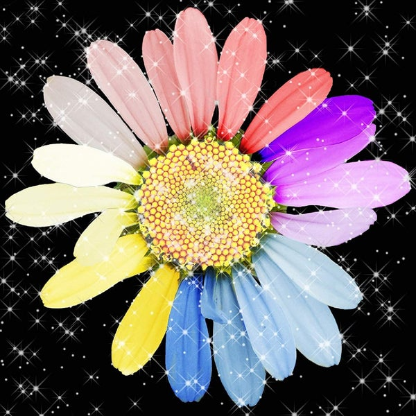 "3/20: Rainbow Flower on Black (Full drill - square diamonds) 13.5""x13.5"" (#726)"