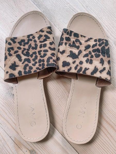 *Leopard Slides - 6*