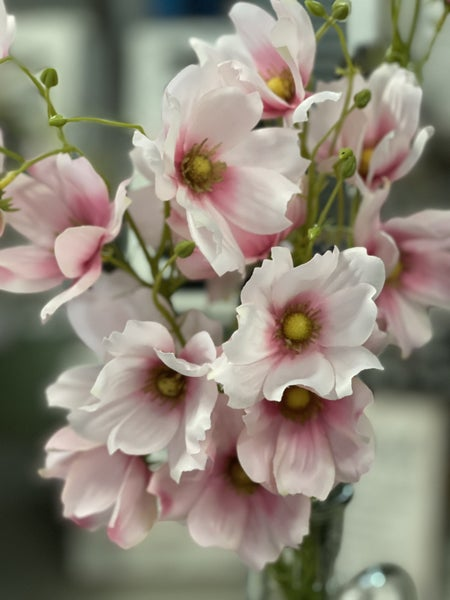 Cosmos Flower (3 Stems)