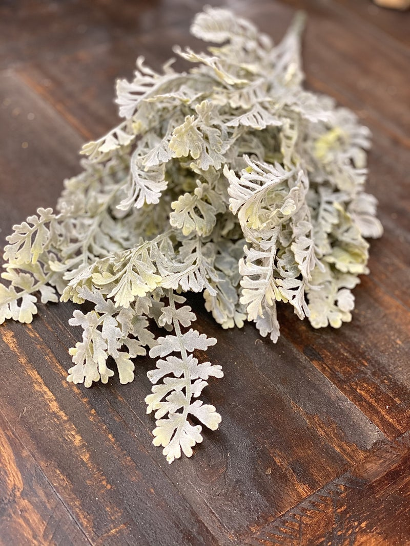Dusty Miller Bush