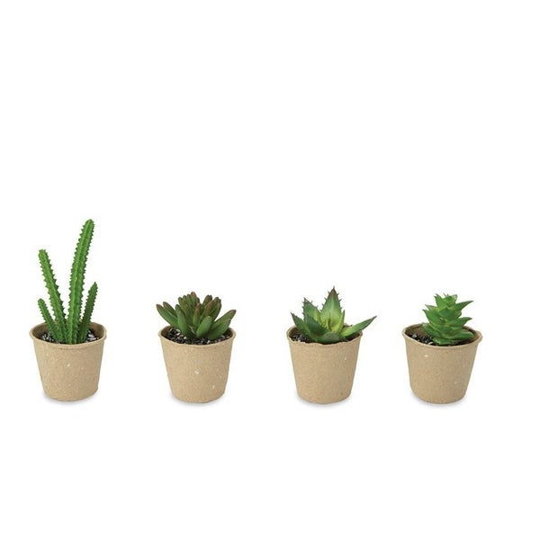 Paper Pot Set of 2 Succulents