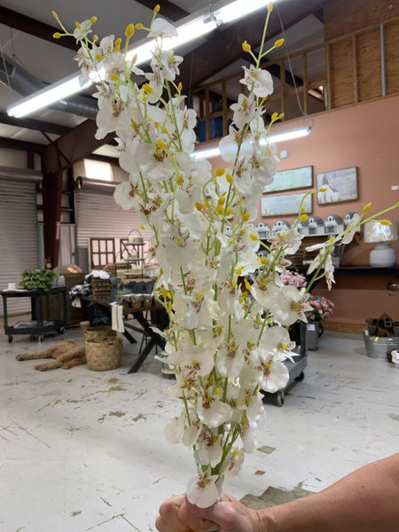 Gorgeous White Orchid Stems