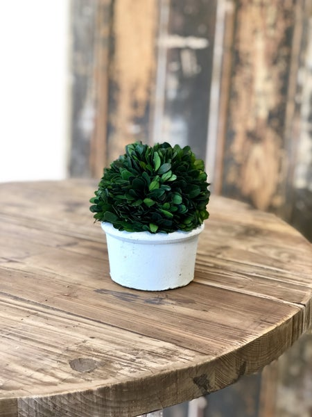 Boxwood Ball in Cement Pot