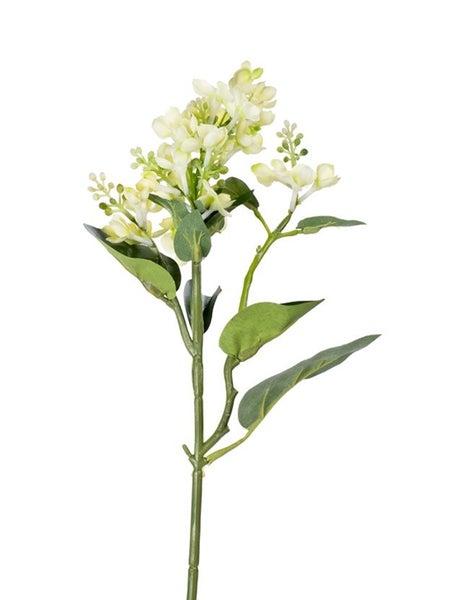 WHITE GREEN LILAC