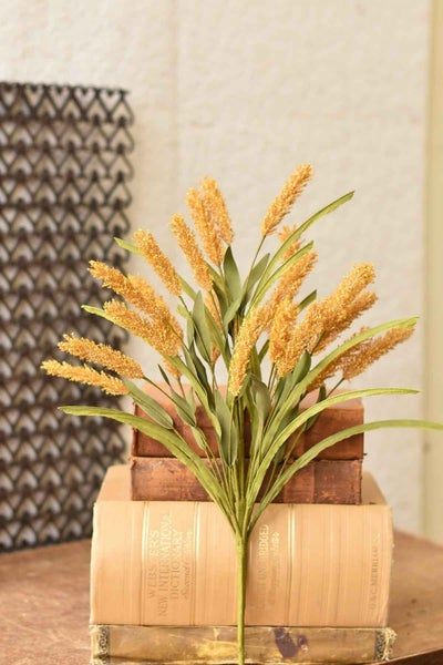Wheatgrass Bush