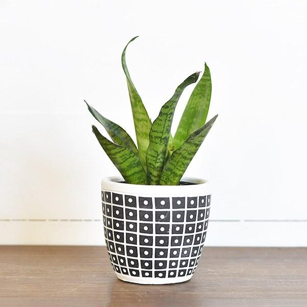"4.75"" Dot Stripe Pot"