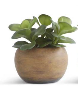 Camillia Succulent in Paper Pulp Pot