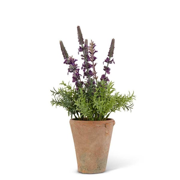 Purple Lavender in Distressed Clay Pot