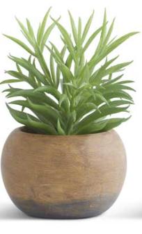 Radiator Succulent in Paper Pulp Pot