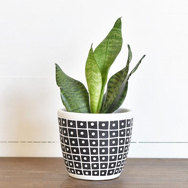"5.5"" Dot Stripe Pot"