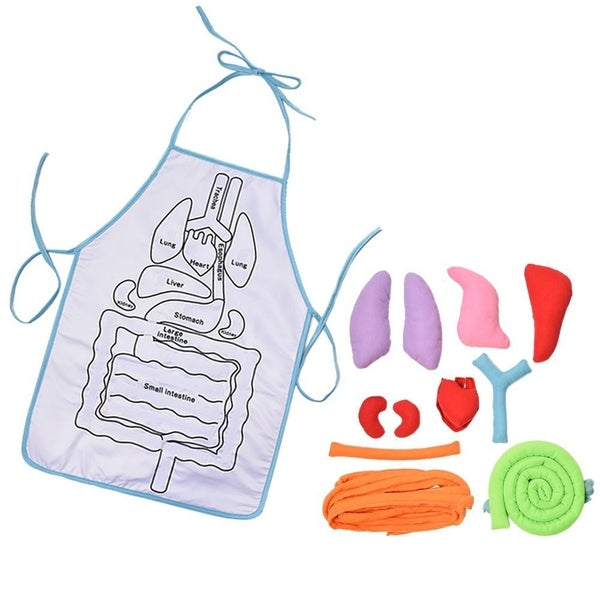 Dr. Kid - Learn About Anatomy Apron