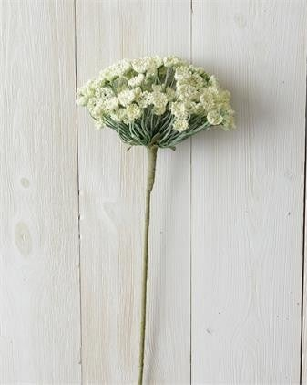 Branch Allium White