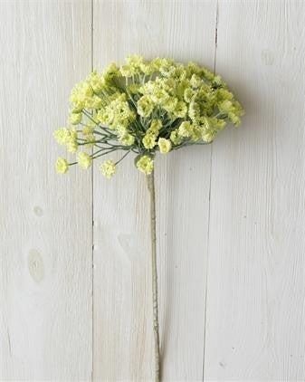 Yellow Allium Branch