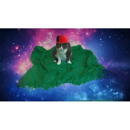 Magic Carpet Cat Toy
