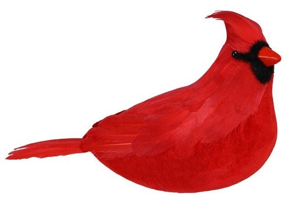 """11""""L X 7""""H Feather Cardinal"""